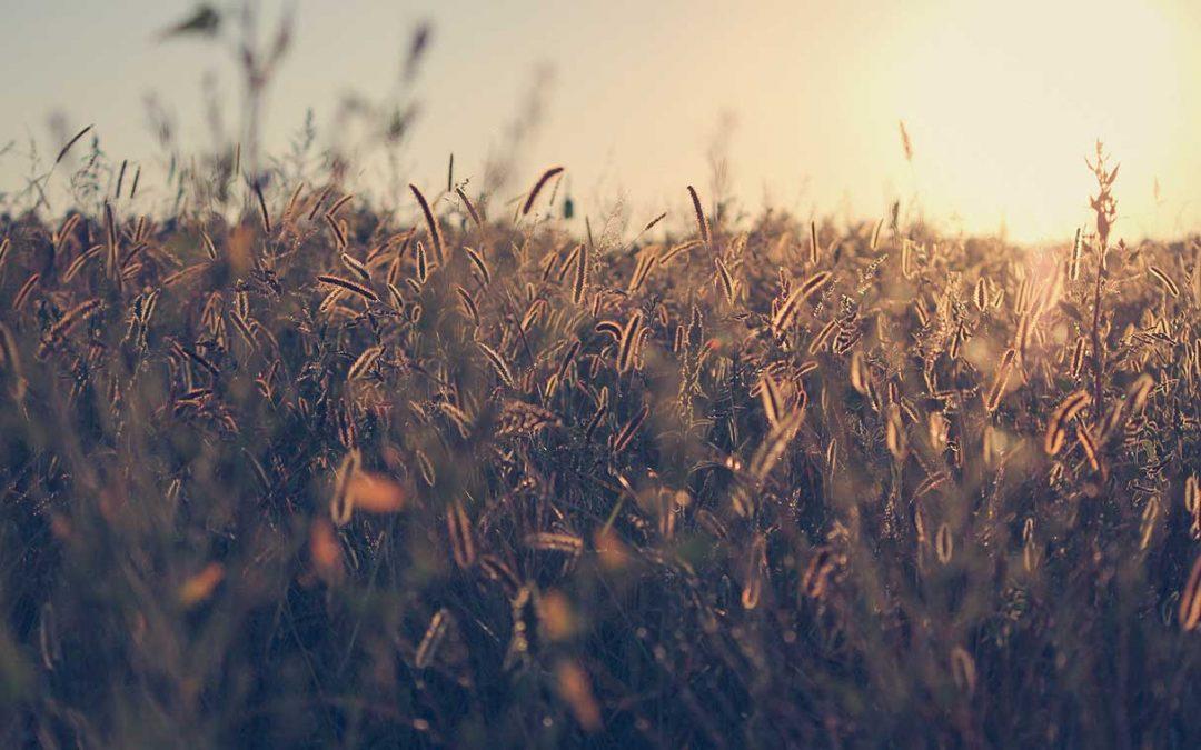 Kalászosok – Tippek a szakértőktől