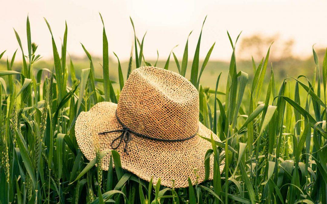 Kukorica – Tippek a szakértőktől