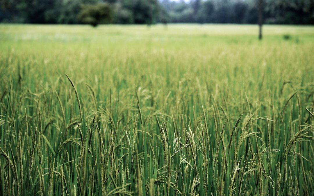 A széndioxid hatása a mezőgazdaságban és a táplálkozásban