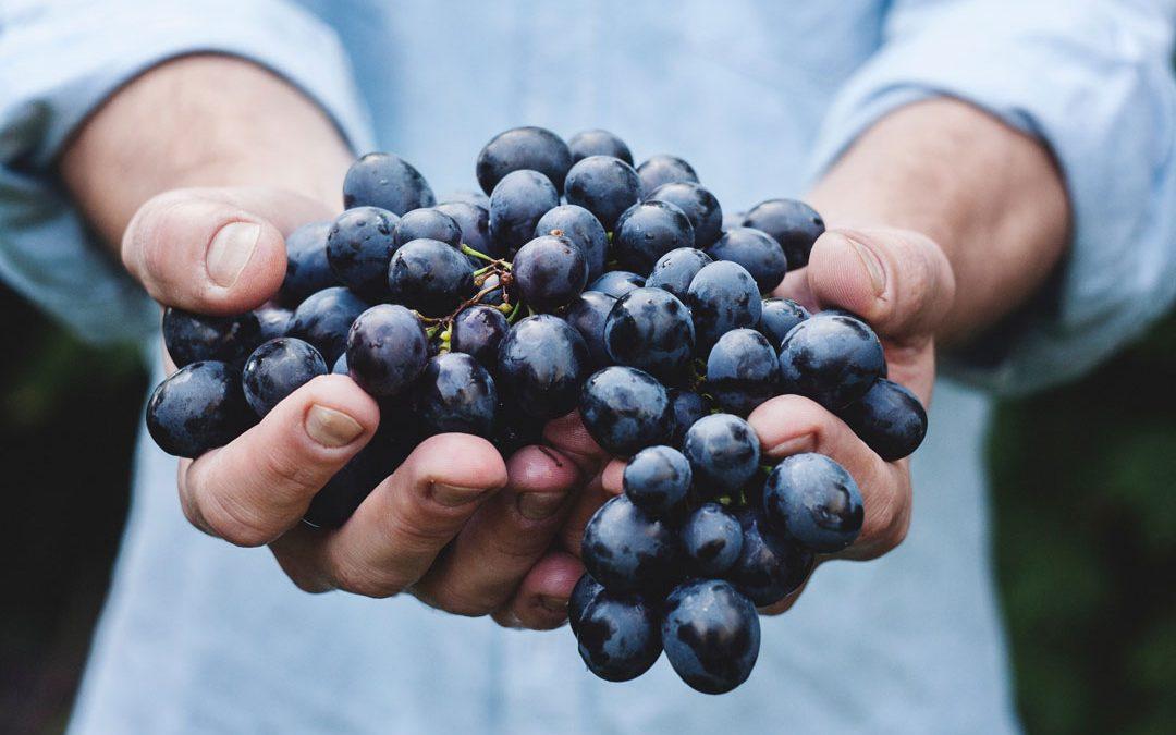 A szőlő növényvédelmének alapjai